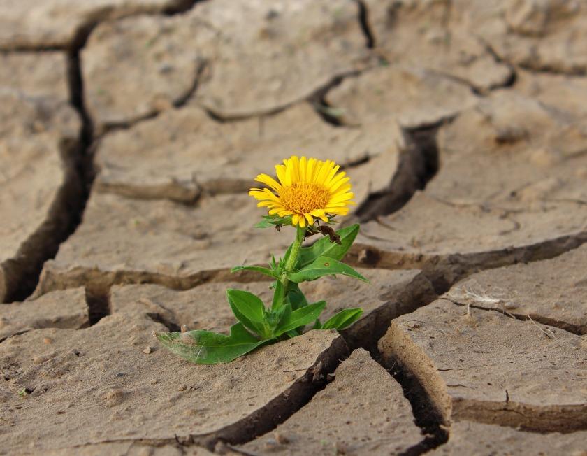 fiore tra le pietre